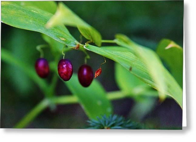 Watermelon Greeting Cards - Watermelon Berries Greeting Card by Lori Mahaffey