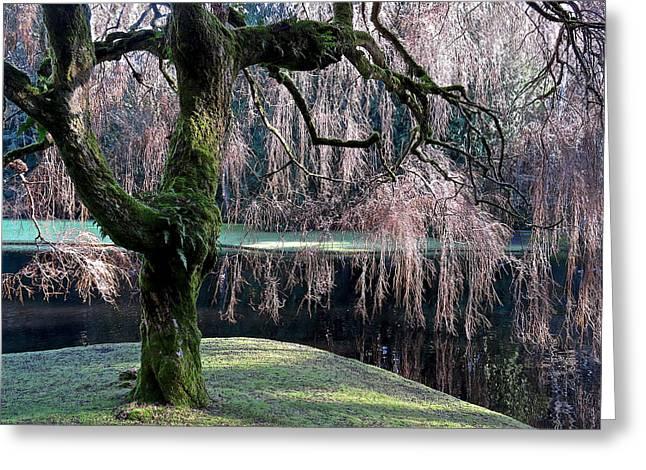 Willow Lake Digital Art Greeting Cards - Waters Edge Greeting Card by Renee Bryant