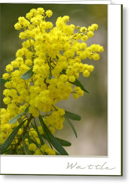 Wattle Greeting Cards - Wattle Greeting Card by Holly Kempe