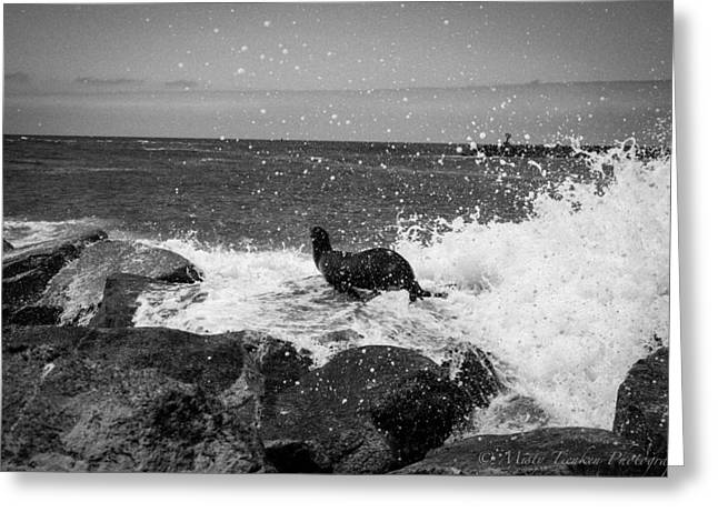 Splish Splash Greeting Cards - Wave v Seal Photo Series 2 Greeting Card by Misty Tienken