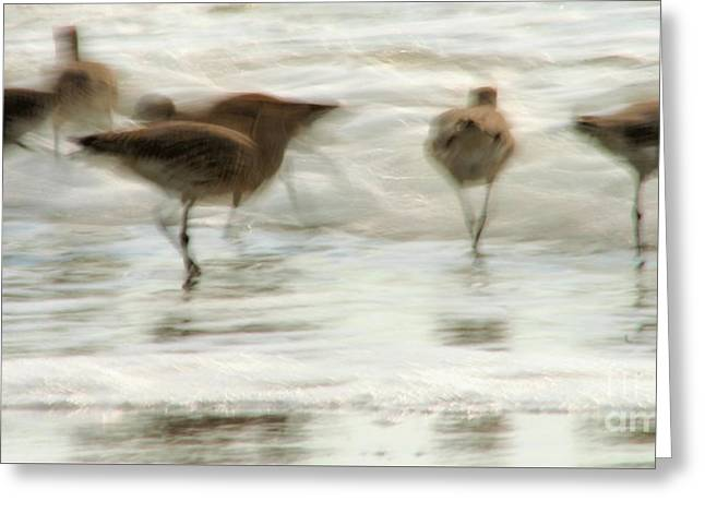 Plundering Plover Series Greeting Card by Angela Rath