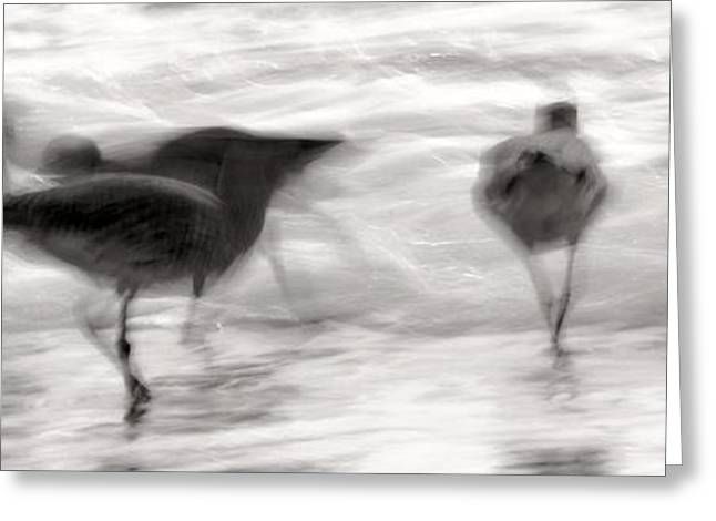 Plundering Plover Series In Black And White 4 Greeting Card by Angela Rath