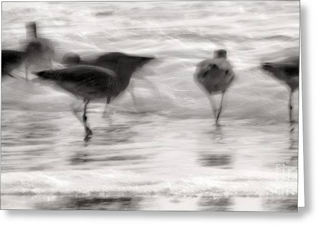 Plundering Plover Series In Black And White 5 Greeting Card by Angela Rath
