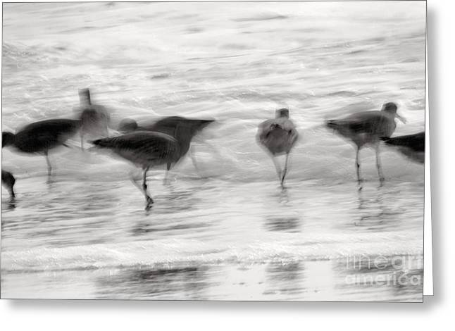 Plundering Plover Series In Black And White 2 Greeting Card by Angela Rath