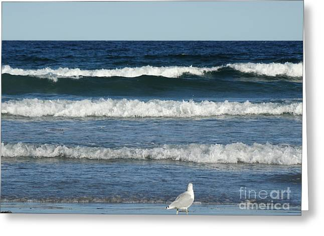 Seabirds Greeting Cards - Waves Waves And More Waves Greeting Card by Gina Sullivan