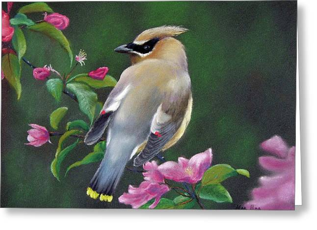 Cherry Blossoms Pastels Greeting Cards - Waxwing and Cherry Blossoms Greeting Card by Marcus Moller