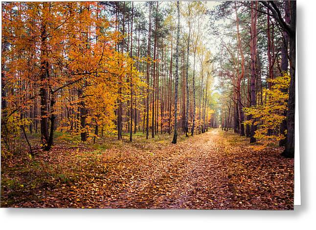 Fall Trees Greeting Cards - Way of Light Greeting Card by Dmytro Korol