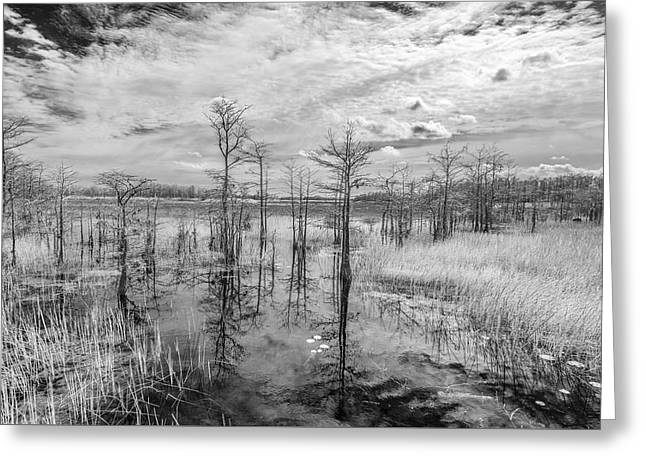 Pond In Park Greeting Cards - We Cant Walk Greeting Card by Jon Glaser