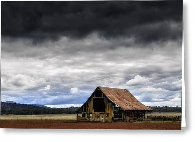 Winter Storm Greeting Cards - Weathered a Few Greeting Card by Dennis Adams