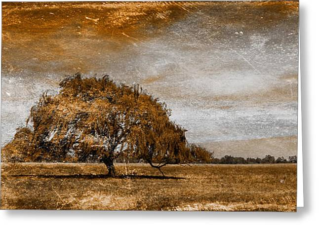 Country Scenes Greeting Cards - Weathered Greeting Card by Az Jackson