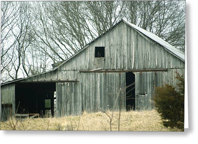 Weathered Barn In Winter Greeting Card by Cricket Hackmann