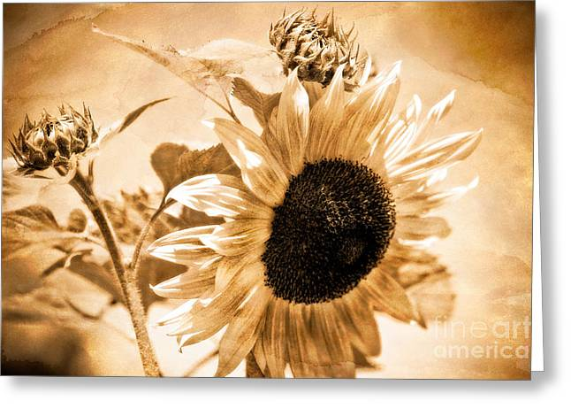 Weathered Beauty Greeting Card by Venetta Archer