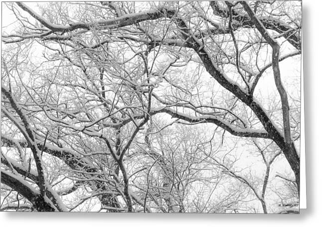 Winter Storm Greeting Cards - Weathered  Greeting Card by Brian Wallace