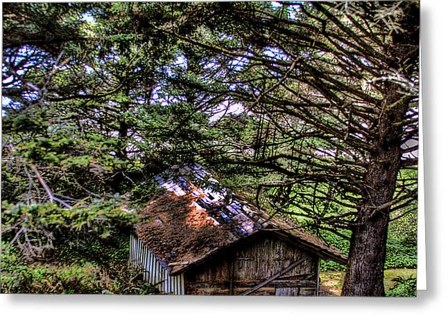 Weathered Shed Greeting Card by David Patterson