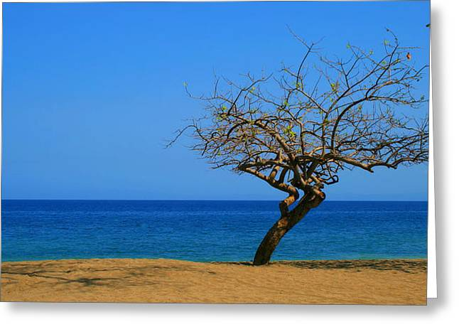 Best Ocean Photography Greeting Cards - Weathered Tree Greeting Card by Perry Webster