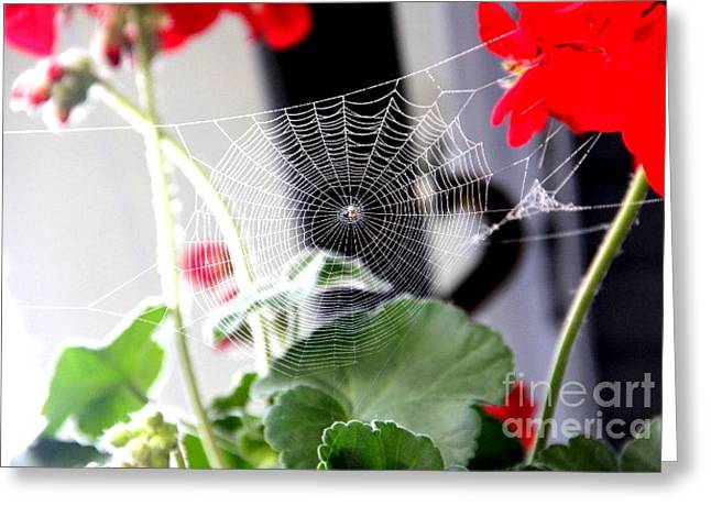 Red Geraniums Greeting Cards - Web of Beauty Greeting Card by Suzanne Thomas