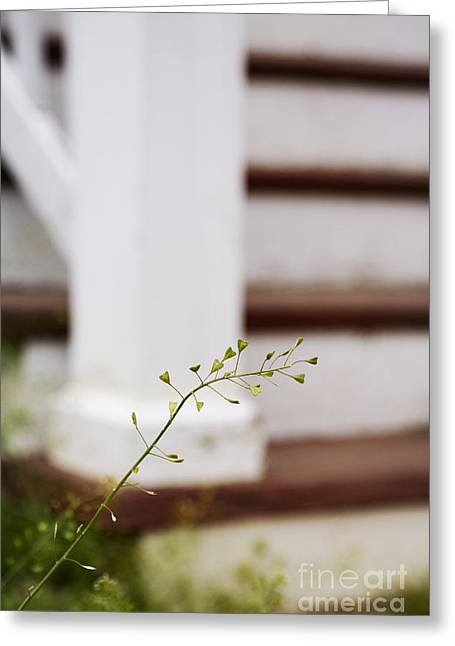 Side Porch Greeting Cards - Weed Greeting Card by Margie Hurwich