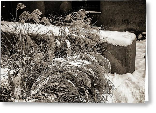 The Cost Of War Greeting Cards - Weeds and Snow Greeting Card by Jon Burch Photography