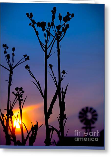 Royal Art Greeting Cards - Weeds and Windmill Greeting Card by James Aiken