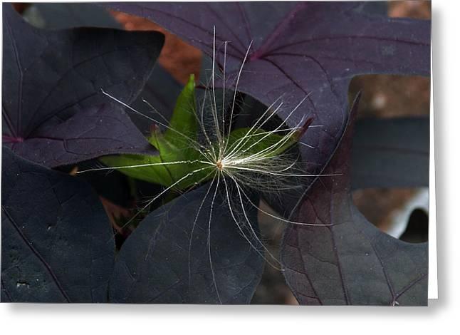 Weeds N Seeds Greeting Card by Skip Willits