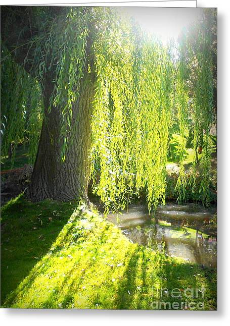 Weeping Greeting Cards - Weepers Greeting Card by Pacific Nomad Images