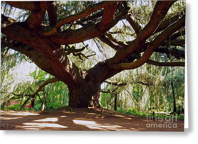 Vallee Greeting Cards - Weeping Blue Atlas Cedar Greeting Card by Alex Cassels