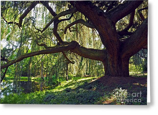 Haut Greeting Cards - Weeping Blue Atlas Cedar Tree Greeting Card by Alex Cassels