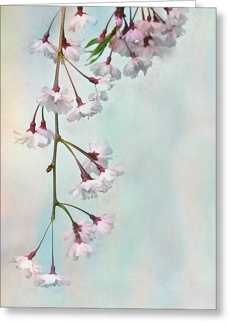 Weeping Greeting Cards - Weeping Cherry Greeting Card by Lori Deiter