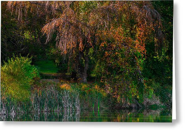 Weeping Greeting Cards - Weeping Tree and Still Water Greeting Card by Steven Maxx