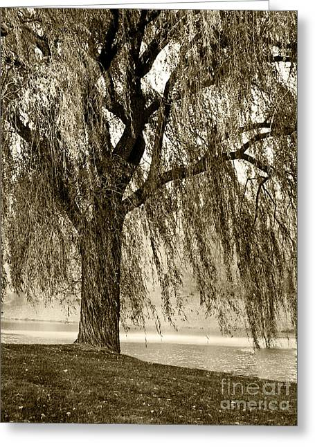 Weeping Willow Mist Greeting Card by Carol F Austin