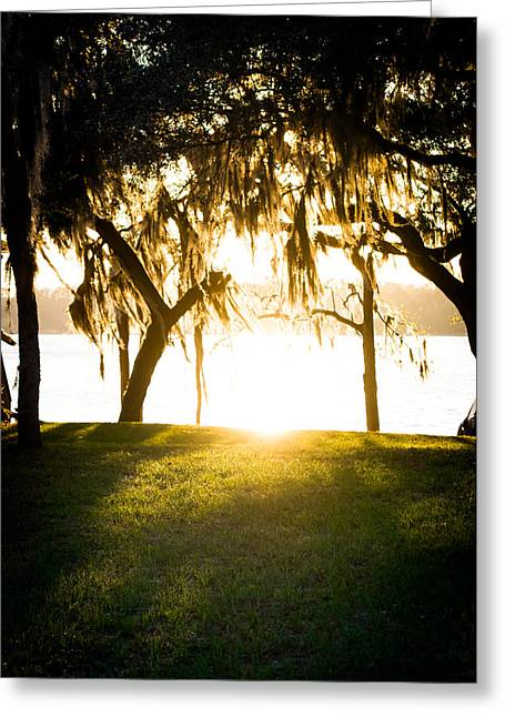 A Summer Evening Landscape Greeting Cards - Spanish Moss at Sunset Greeting Card by Shelby Young