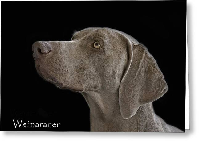 Bred Photographs Greeting Cards - Weimaraner Greeting Card by Larry Linton
