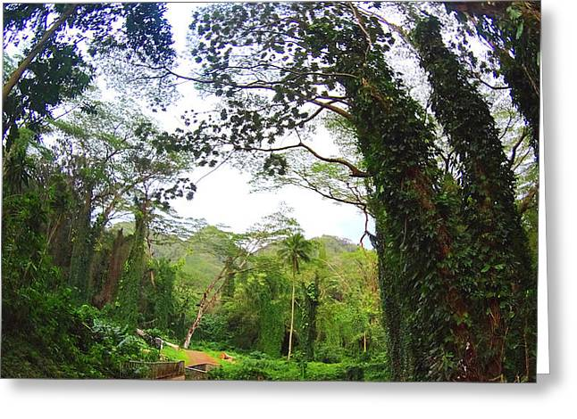 Manoa Falls Greeting Cards - Welcome to HAWAII Greeting Card by Jera Sky