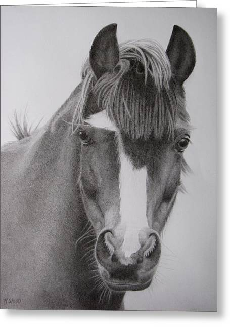 Forelock Drawings Greeting Cards - Welsh Pony Greeting Card by Karen Wood