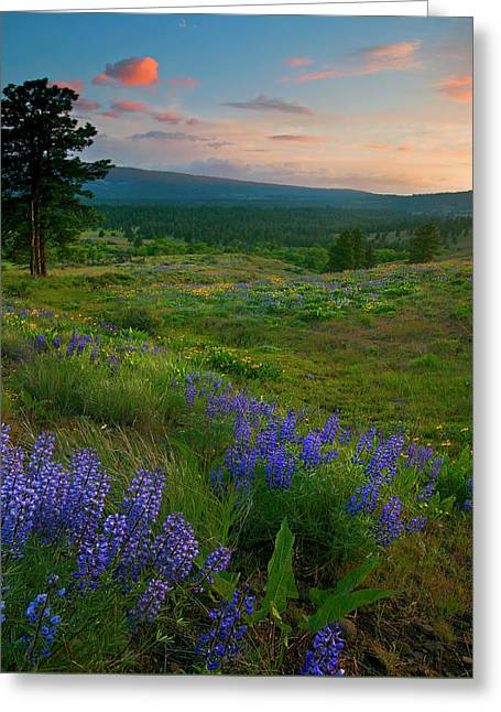 Pines Greeting Cards - Wenas Valley Sunset Greeting Card by Mike  Dawson