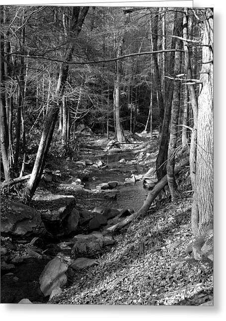 Kathy Schumann Greeting Cards - Wesser Creek Trail Greeting Card by Kathy Schumann