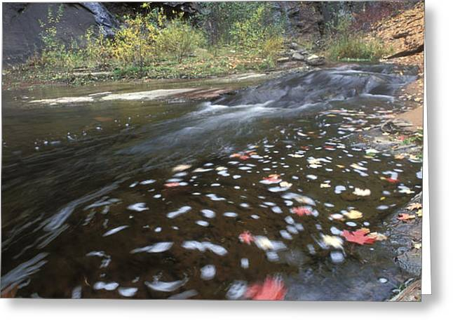 West Fork Oak Creek And Fall Color Greeting Card by Rich Reid