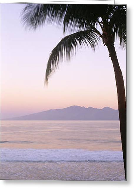Ocean Art Photos Greeting Cards - West Maui Palm Greeting Card by Bill Schildge - Printscapes