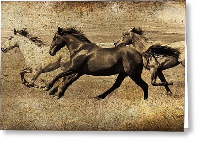The Horse Greeting Cards - Western Flair Greeting Card by Steve McKinzie