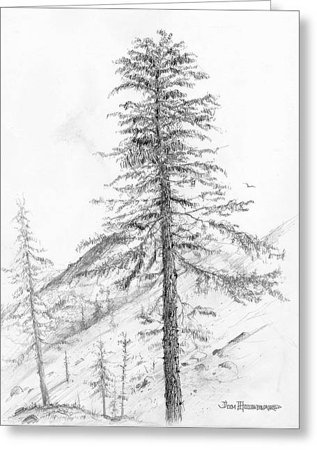 Jim Hubbard Greeting Cards - Western Hemlock Greeting Card by Jim Hubbard