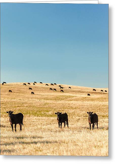 Western Herd Of Cattle Greeting Card by Todd Klassy
