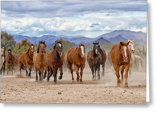 The Horse Greeting Cards - Western Herd Greeting Card by Susan Kordish