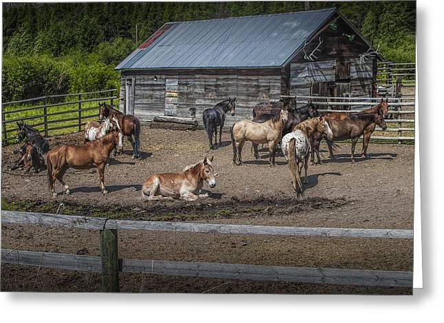 Hooved Mammal Greeting Cards - Western Horses at an Outfitters Corral Greeting Card by Randall Nyhof