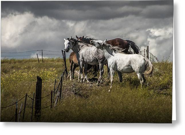 Equestrian Prints Photographs Greeting Cards - Western Horses by the Pasture Fence Greeting Card by Randall Nyhof