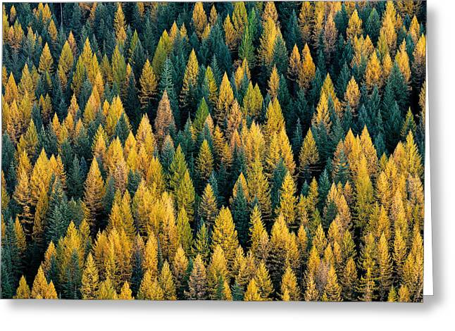 Western Larch Forest Greeting Card by Leland D Howard