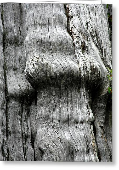 Muscular Greeting Cards - Western Red Cedar - Thuja plicata - Olympic National Park WA Greeting Card by Christine Till