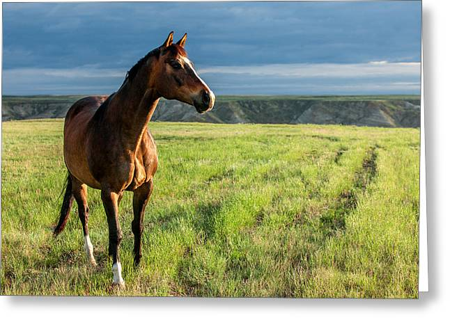 Western Stallion Greeting Card by Todd Klassy