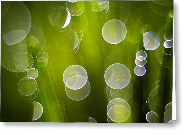 Dewdrops Greeting Cards - Wet Grass  Greeting Card by Silke Magino
