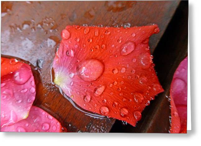 Rose Petals Greeting Cards - Wet Petal 1 Greeting Card by Claudia Goodell