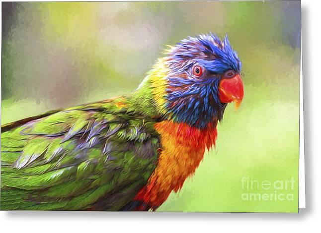 Rainbow Lorikeets Greeting Cards - Wet rainbow lorikeet Greeting Card by Sheila Smart